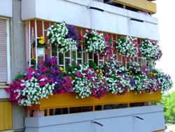 Balkon_Bosa_marjanovic-naslovna_v